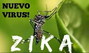 phong-chong-benh-zika-duoi-muoi-bang-12-loai-cay-de-trong-trong-nha-10